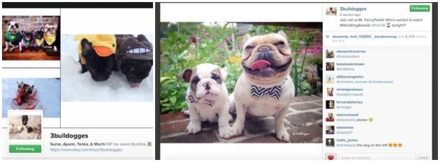 3bulldogges